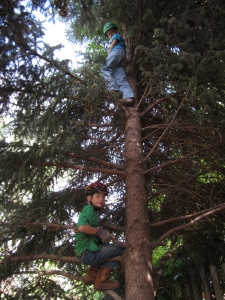 "the boys opted for helmets and longer clothing to shield themselves from the branches as they ""pruned"""