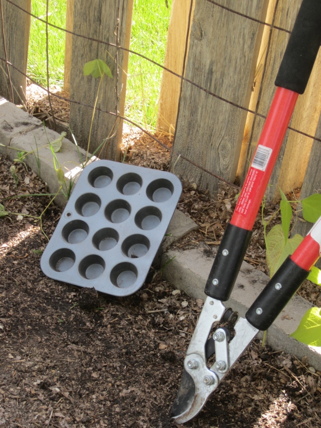 the greatest suggestion I stumbled upon this spring in regards to gardening is the use a mini muffin pan to place impressions in the soil to mark the placement of seeds....its easy and cheap!